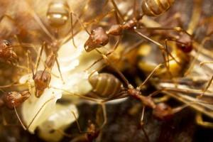 ant pest control service Jacksonville FL