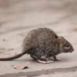 mice exterminator in Jacksonville FL